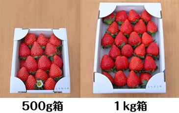 500g箱と1kg箱の比較