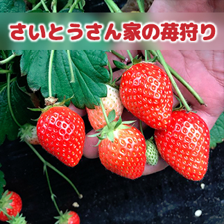 苺狩り情報